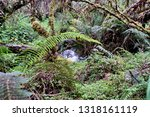 stream in the forest with a... | Shutterstock . vector #1318161119