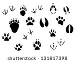 animal footprints and tracks... | Shutterstock . vector #131817398