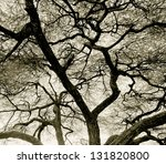 Detailed Tree Branches In Lake...