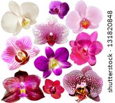 collection of orchid flower... | Shutterstock . vector #131820848