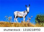 Donkey nature portrait. donkey...