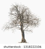 dead tree isolated on white... | Shutterstock . vector #1318222106
