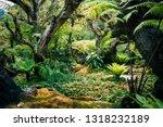 tropical garden with moss fern... | Shutterstock . vector #1318232189