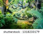 tropical garden with moss fern... | Shutterstock . vector #1318233179