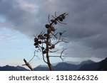 solitary dry branch rises only... | Shutterstock . vector #1318266326