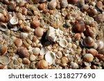 horizontal full frame shot of... | Shutterstock . vector #1318277690