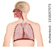 the respiratory tract medical... | Shutterstock .eps vector #1318357073