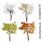 Four Seasons Maple Tree...