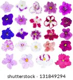 Set Of Twenty Four Violet...
