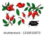 rosehip vector drawing set..... | Shutterstock .eps vector #1318510073