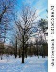 winter deciduous trees | Shutterstock . vector #1318528670