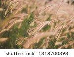 brown grass flowers at sunset | Shutterstock . vector #1318700393