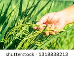 Agriculture  Man's Hand...