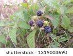 A Close Up Of Blackberry Black...