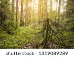 beautiful forest with bright...   Shutterstock . vector #1319089289