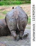 Black Rhinoceros - stock photo