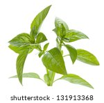 Fresh Basil. Isolated On White...