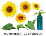 Sunflower Free Object - Fine Art prints
