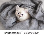Stock photo siberian neva masquerade kitten lying on a soft bad 131919524