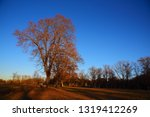 trees on a meadow at a sunny...   Shutterstock . vector #1319412269