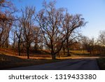 trees on a meadow at a sunny...   Shutterstock . vector #1319433380