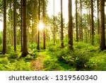 beautiful forest in spring with ... | Shutterstock . vector #1319560340