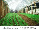 planting small trees in the...   Shutterstock . vector #1319715236