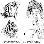 vector drawings sketches... | Shutterstock .eps vector #1319847389