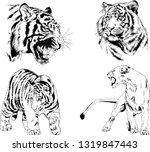 vector drawings sketches... | Shutterstock .eps vector #1319847443