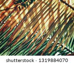 beautiful of coconut palm... | Shutterstock . vector #1319884070