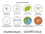 insects characteristics... | Shutterstock .eps vector #1319951516