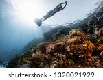 woman free diver glides in... | Shutterstock . vector #1320021929