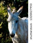 donkey in the field on a sunny... | Shutterstock . vector #1320027953