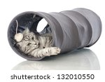 Stock photo playing cat 132010550