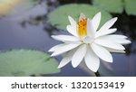 beautiful white lotus flower ... | Shutterstock . vector #1320153419