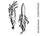 hand drawn set of ginseng roots.... | Shutterstock .eps vector #1320195620