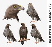 set of eagles in different... | Shutterstock .eps vector #1320204146