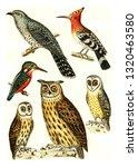 Cuckoo  Hoopoe  Kingfisher ...