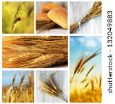 photo collage of wheat  rye and ... | Shutterstock . vector #132049883