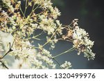 beautiful of spring white... | Shutterstock . vector #1320499976