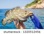 Beautiful And Close Up Grouper...