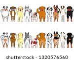 dogs breed border set with... | Shutterstock .eps vector #1320576560