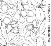 macadamia vector pattern | Shutterstock .eps vector #1320748076