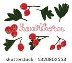 vector illustration of hawthorn ... | Shutterstock .eps vector #1320802553