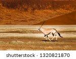 oryx antelope and orange dunes... | Shutterstock . vector #1320821870