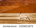 oryx antelope and orange dunes... | Shutterstock . vector #1320821873