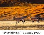 oryx antelope and orange dunes... | Shutterstock . vector #1320821900