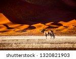 oryx antelope and orange dunes... | Shutterstock . vector #1320821903