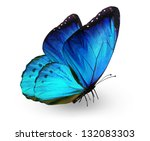 Stock photo blue butterfly isolated on white 132083303