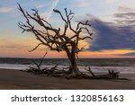 sunrise on driftwod beach  ... | Shutterstock . vector #1320856163